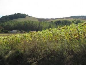 village_walk_view